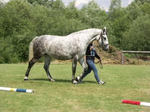 Śląski horse